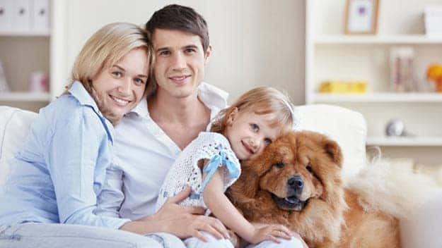 Wills & Trusts dog-young-family Direct Wills Malvern Wells